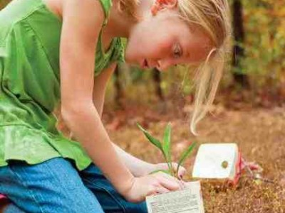 School Gardening Competition: Carton 2 Garden